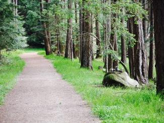 Favorite Path